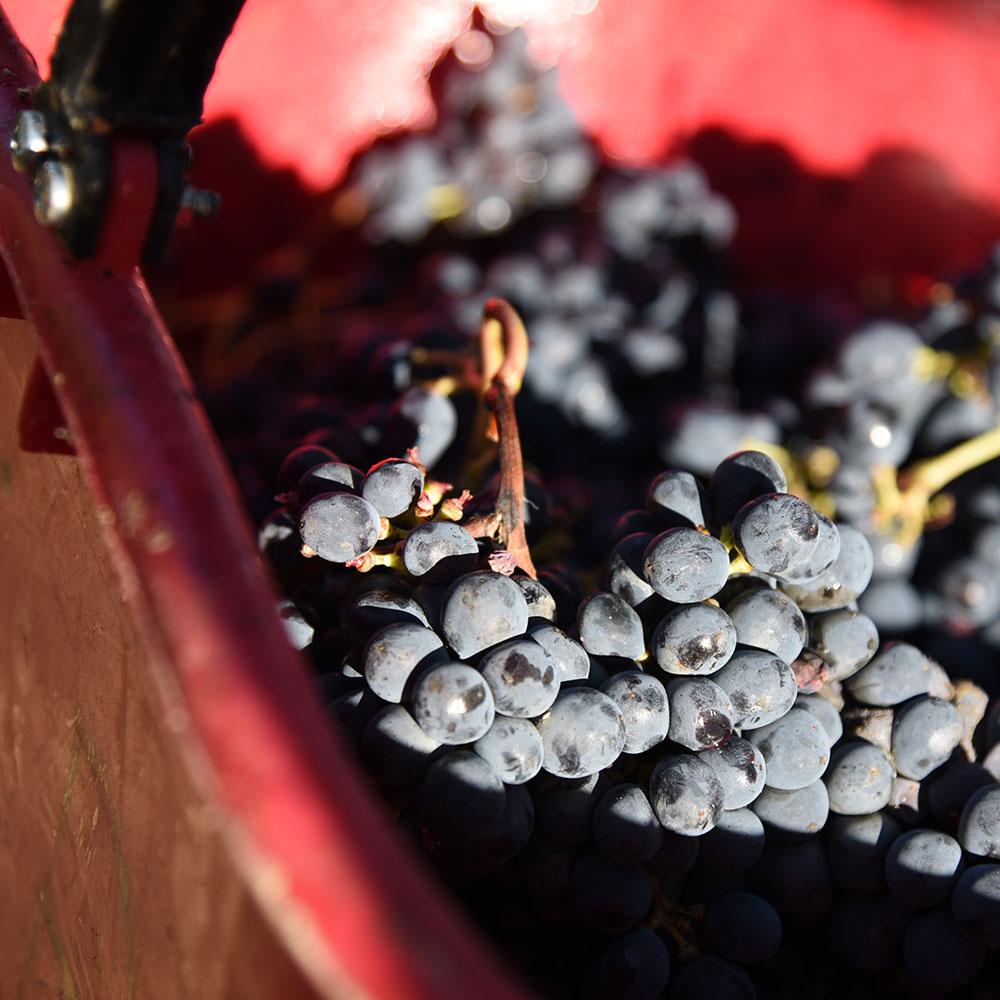 Enoturismo degustazione Wine Master Chef